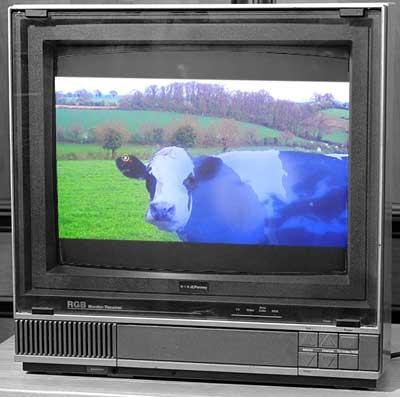 Blaue tagesschau-Kuh